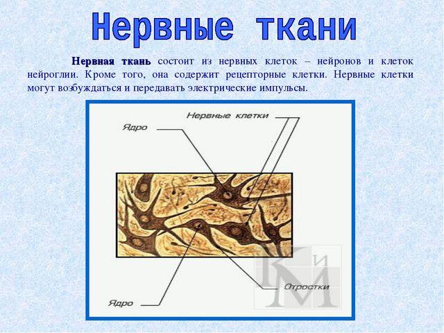 Нервная ткань состоит из нервных клеток – нейронов и клеток нейроглии. Кроме...