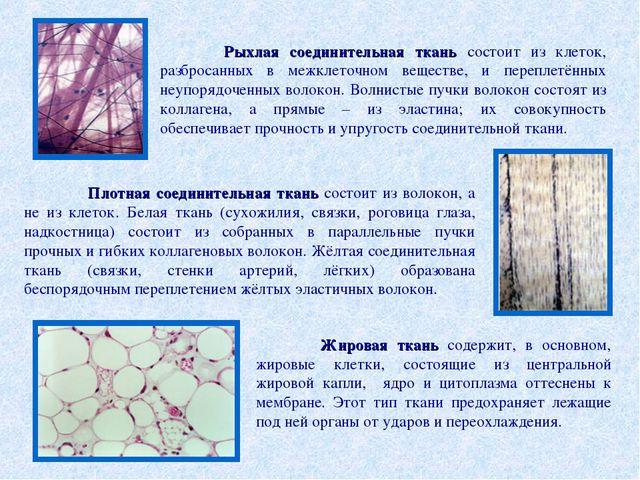 Рыхлая соединительная ткань состоит из клеток, разбросанных в межклеточном в...