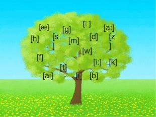 [w] [t] [s] [d] [f] [g] [h] [k] [z] [b] [m] [ai] [æ] [a:] [i] [i:] [ᴧ]