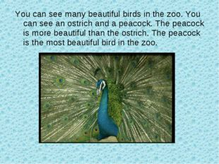 You can see many beautiful birds in the zoo. You can see an ostrich and a pea