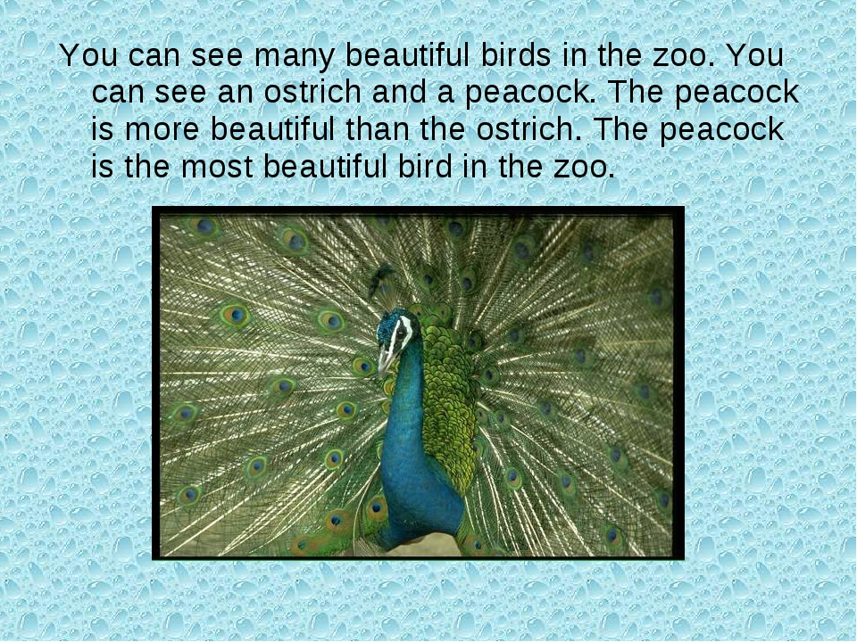 You can see many beautiful birds in the zoo. You can see an ostrich and a pea...
