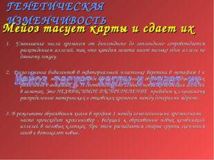 ГЕНЕТИЧЕСКАЯ ИЗМЕНЧИВОСТЬ 1. Уменьшение числа хромосом от диплоидного до гапл