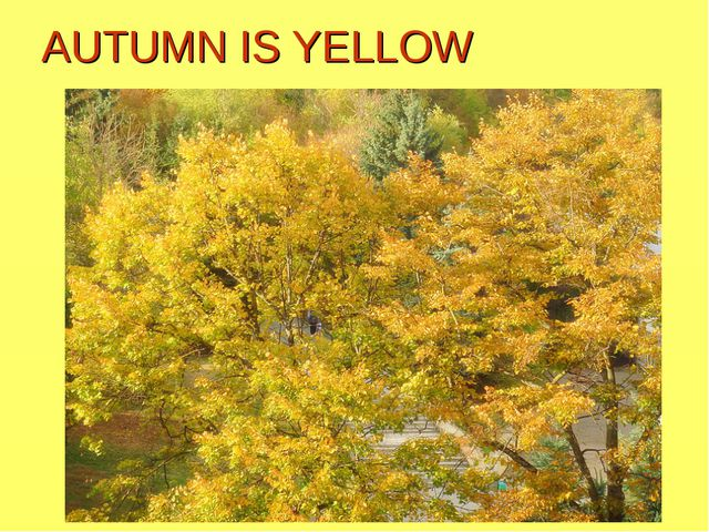 AUTUMN IS YELLOW