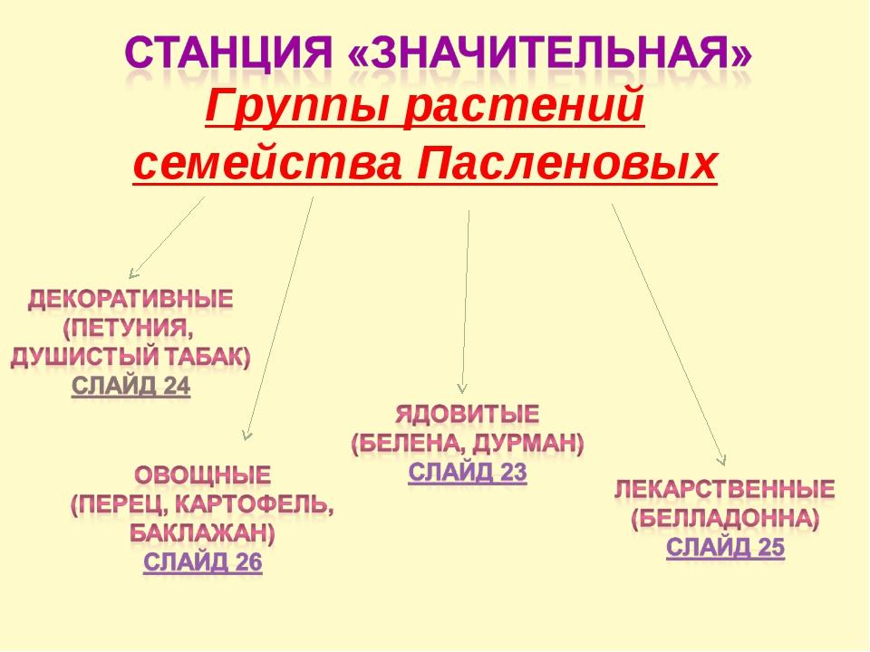 Группы растений семейства Пасленовых