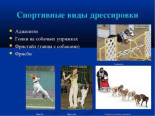 Спортивные виды дрессировки Аджилити Гонки на собачьих упряжках Фристайл (тан