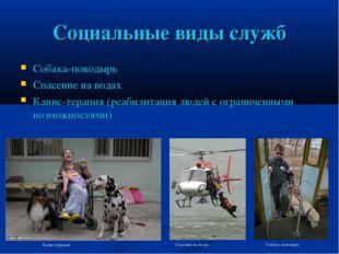 Социальные виды служб Собака-поводырь Спасение на водах Канис-терапия (реабил