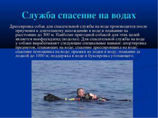 Служба спасение на водах Дрессировка собак для спасательной службы на воде пр