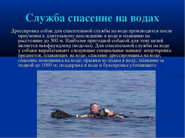 Служба спасение на водах Дрессировка собак для спасательной службы на воде пр...