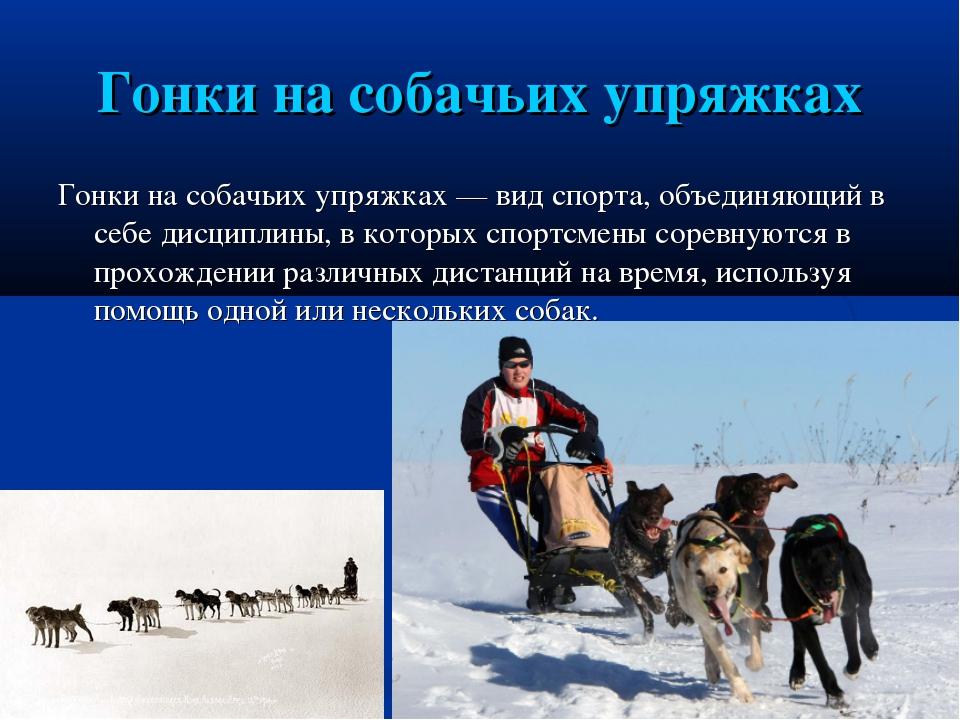 Гонки на собачьих упряжках Гонки на собачьих упряжках— вид спорта, объединяю...