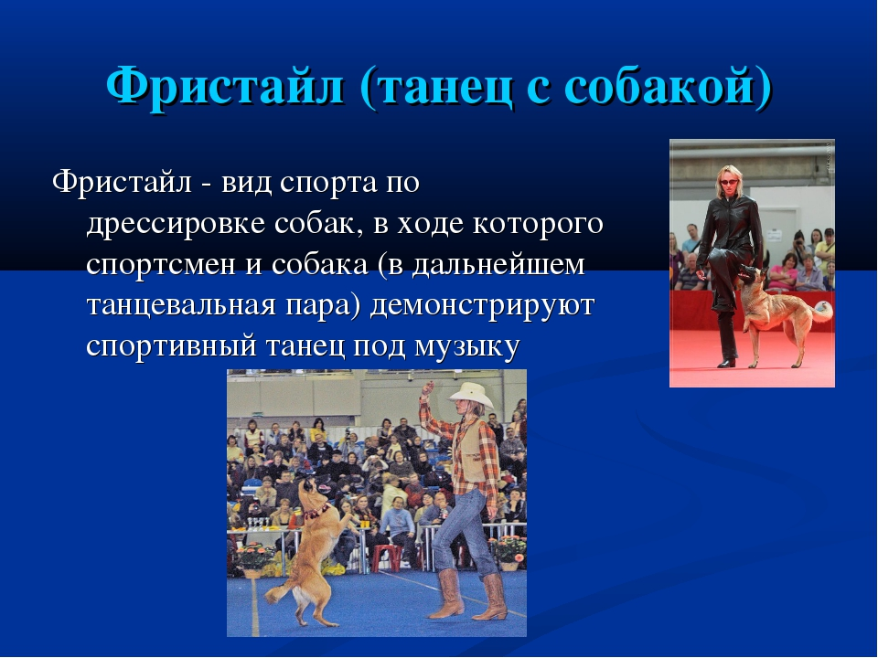 Фристайл (танец с собакой) Фристайл - вид спорта по дрессировке собак, в ходе...