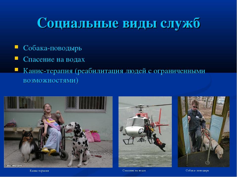Социальные виды служб Собака-поводырь Спасение на водах Канис-терапия (реабил...