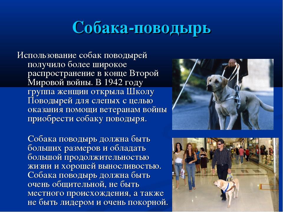 Собака-поводырь Использование собак поводырей получило более широкое распрост...