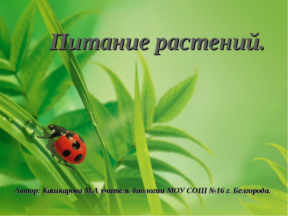 Питание растений. Автор: Кашкарова М.А учитель биологии МОУ СОШ №16 г. Белгор...