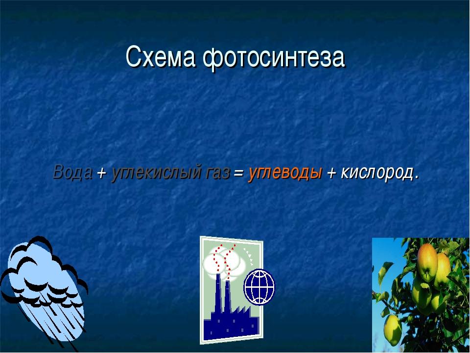 Схема фотосинтеза Вода + углекислый газ = углеводы + кислород.