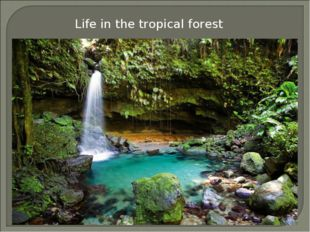 Life in the tropical forest