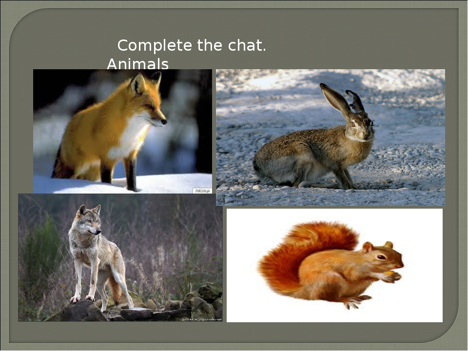 Complete the chat. Animals