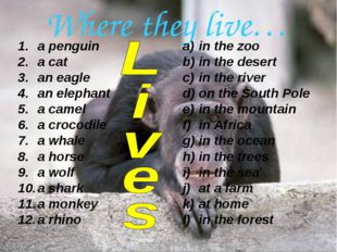 Where they live… a penguin a cat an eagle an elephant a camel a crocodile a w