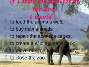 If I were the director of the Zoo, I would… to feed the animals well; to buy
