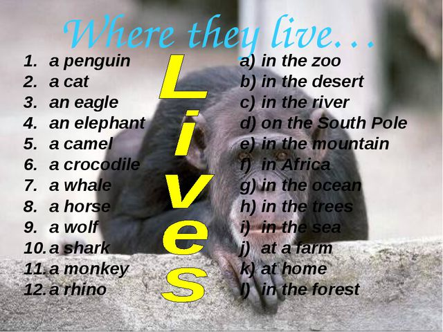 Where they live… a penguin a cat an eagle an elephant a camel a crocodile a w...