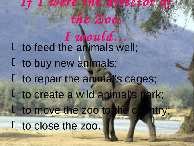If I were the director of the Zoo, I would… to feed the animals well; to buy...
