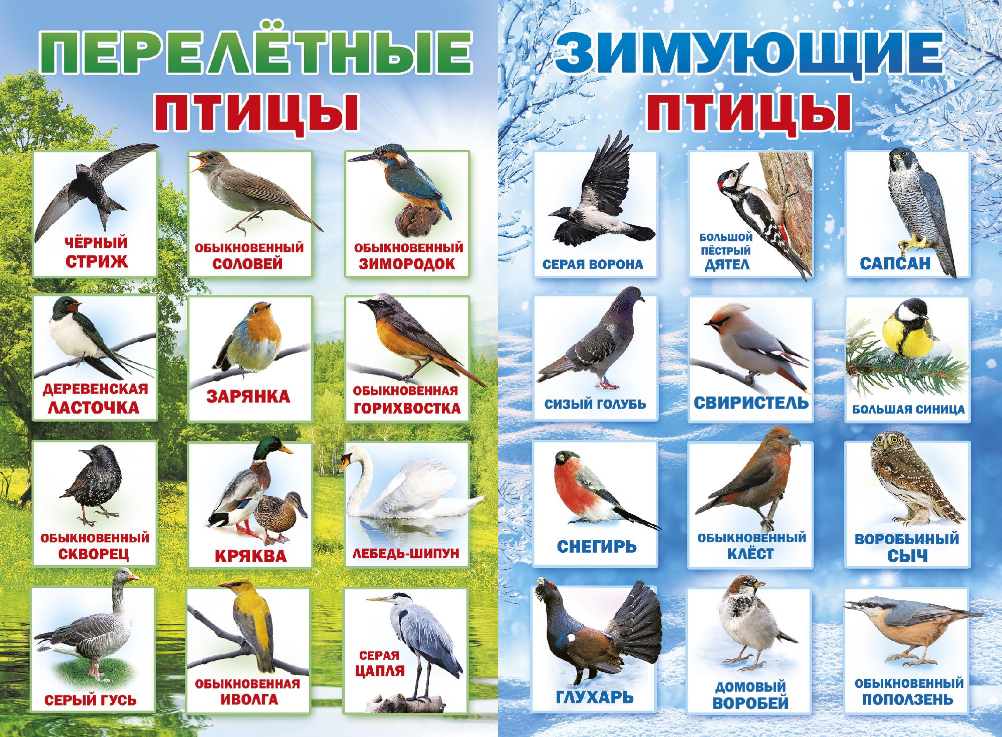 предлагается птицы зимующие в ярославской области фото с названиями необычный мир, потому