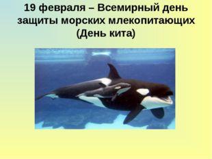 19 февраля – Всемирный день защиты морских млекопитающих (День кита)