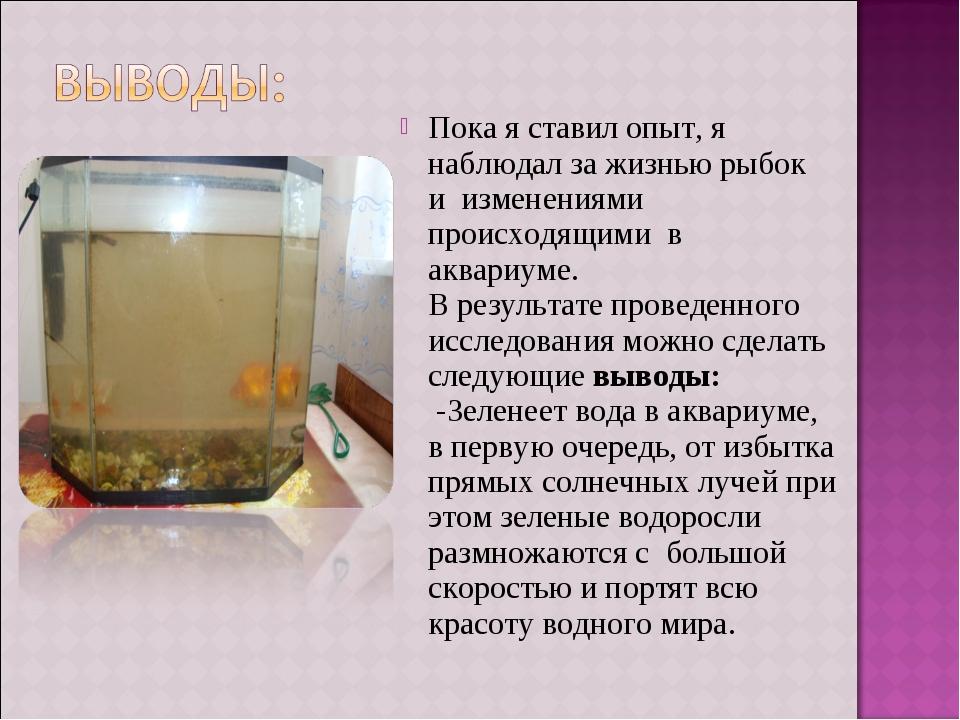 Пока я ставил опыт, я наблюдал за жизнью рыбок и изменениями происходящими в...