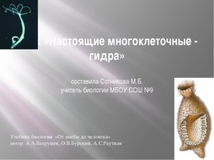 Урок «Настоящие многоклеточные - гидра» составила Сотникова М.Б. учитель биол
