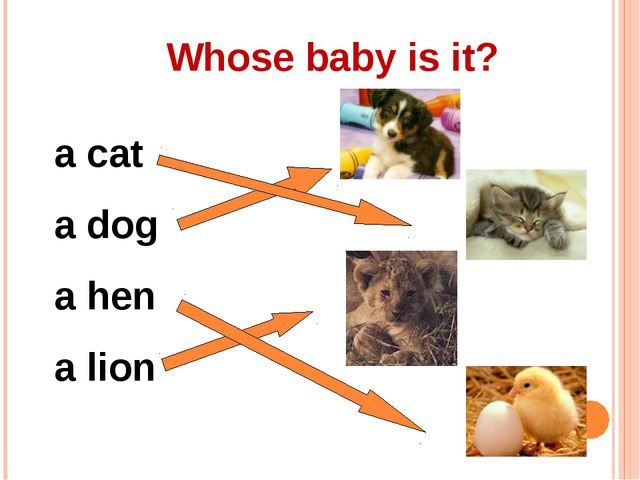 Whose baby is it? a cat a dog a hen a lion