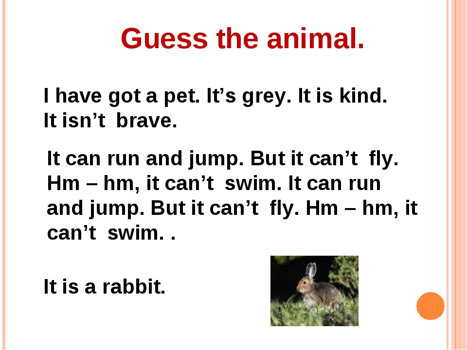 Guess the animal. I have got a pet. It's grey. It is kind. It isn't brave. It...