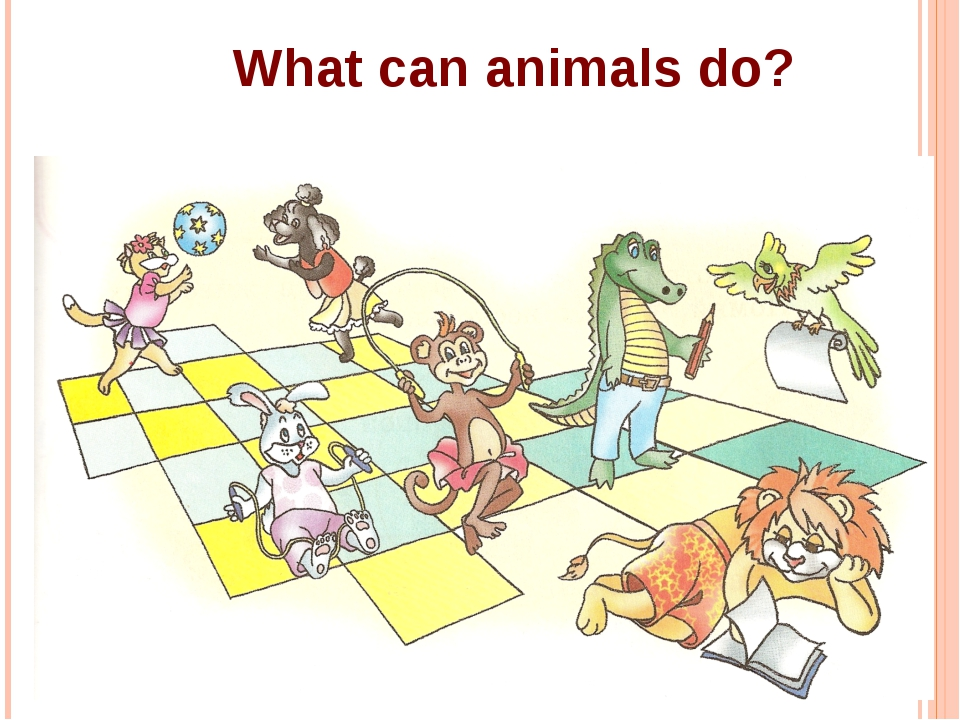 What can animals do?