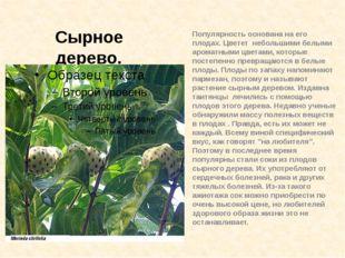 Популярность основана на его плодах. Цветет небольшими белыми ароматными цвет