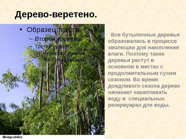 Все бутылочные деревья образовались в процессе эволюции для накопления влаги...