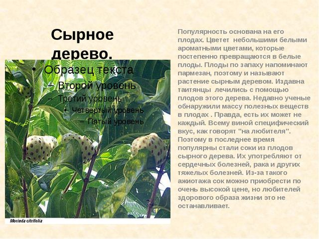 Популярность основана на его плодах. Цветет небольшими белыми ароматными цвет...