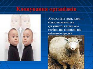 Клонування організмів Клоном (від грец. клон — гілка) називається сукупність