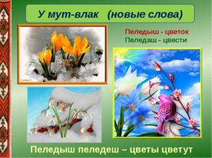 У мут-влак (новые слова) Пеледыш - цветок Пеледаш - цвести Пеледыш пеледеш –