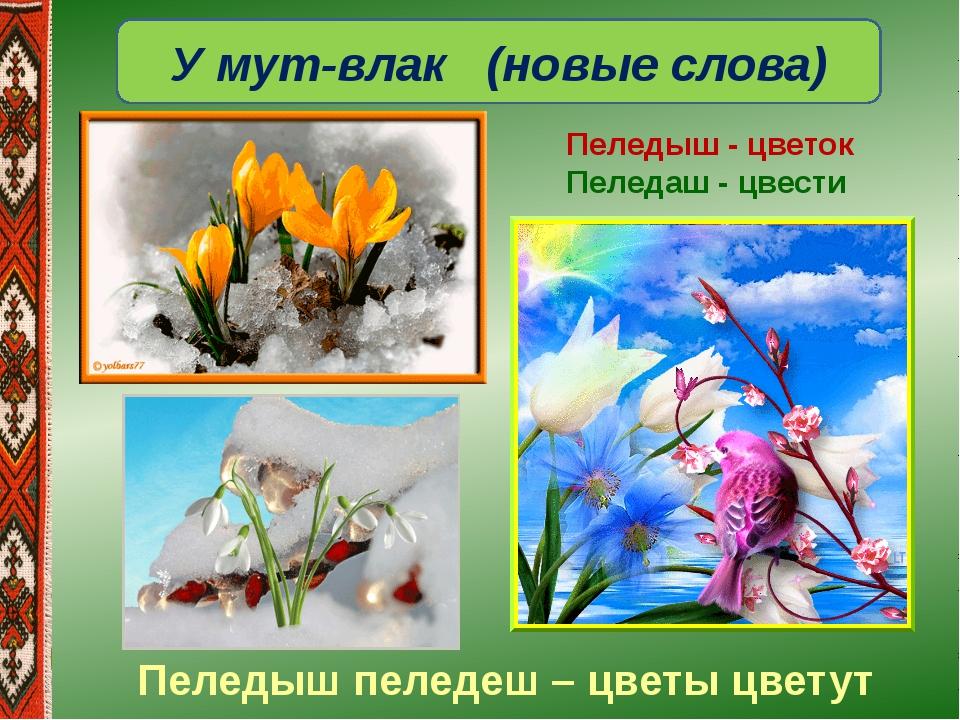 У мут-влак (новые слова) Пеледыш - цветок Пеледаш - цвести Пеледыш пеледеш –...