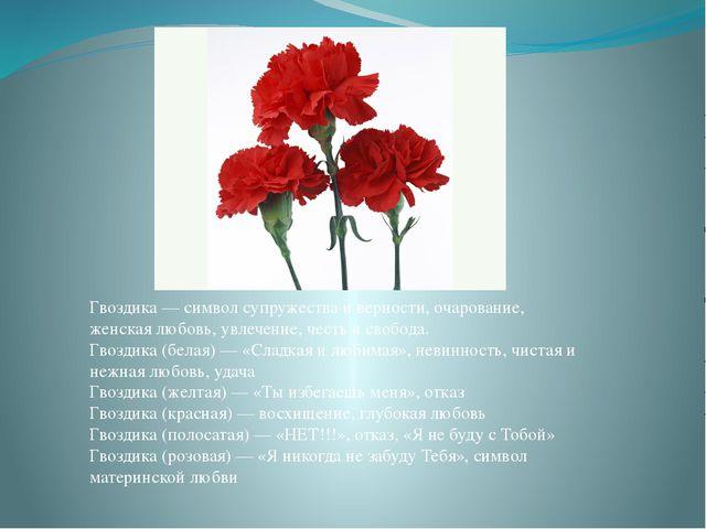 Гвоздика — символ супружества и верности, очарование, женская любовь, увлече...