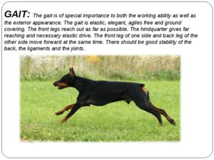 GAIT: The gait is of special importance to both the working ability as well a