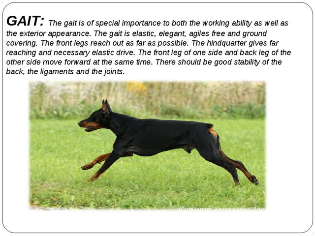 GAIT: The gait is of special importance to both the working ability as well a...