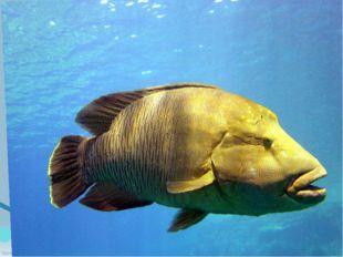Знаете ли вы этих рыб?