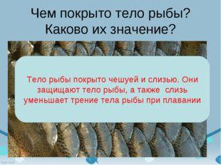 Чем покрыто тело рыбы? Каково их значение? Тело рыбы покрыто чешуей и слизью.