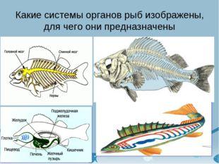 Какие системы органов рыб изображены, для чего они предназначены