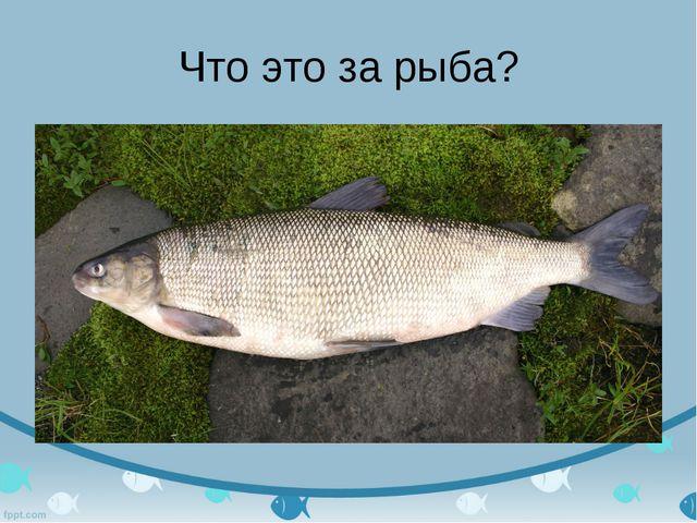 Что это за рыба?