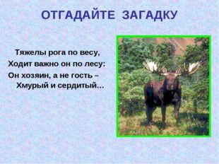 ОТГАДАЙТЕ ЗАГАДКУ Тяжелы рога по весу, Ходит важно он по лесу: Он хозяин, а н