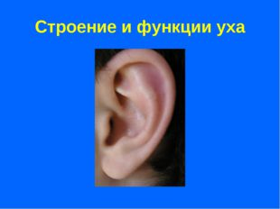Строение и функции уха