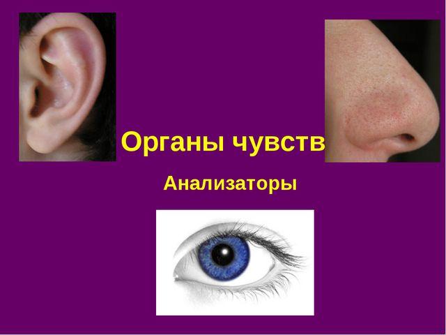 Органы чувств Анализаторы