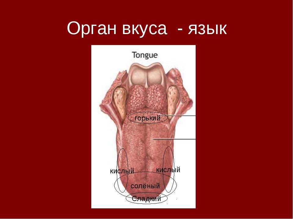 Орган вкуса - язык Сладкий горький кислый кислый солёный