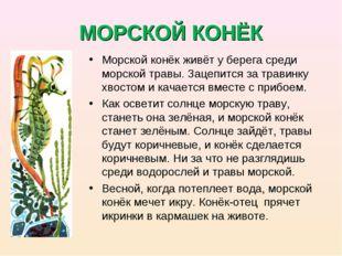 МОРСКОЙ КОНЁК Морской конёк живёт у берега среди морской травы. Зацепится за