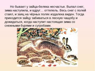 Но бывает у зайца-беляка несчастье. Выпал снег, зима наступила, и вдруг… отт